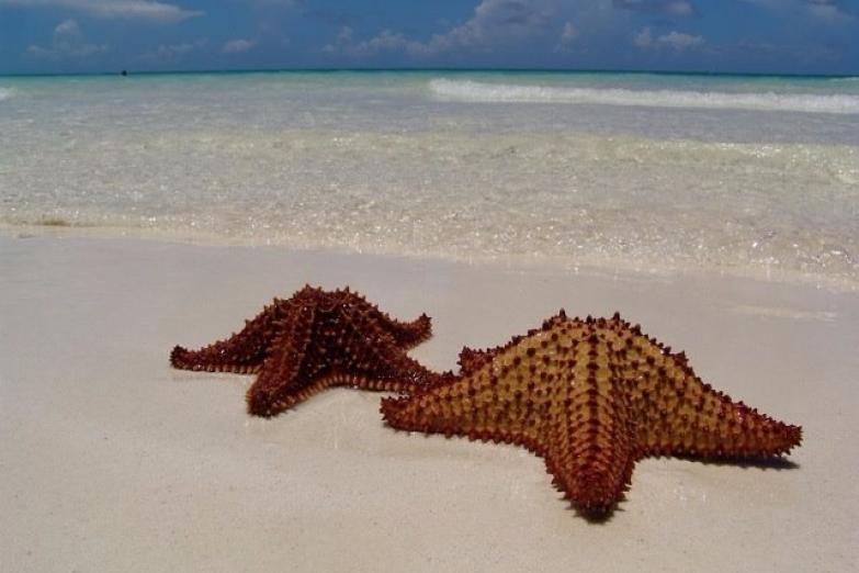 Морские звезды на острове Кайо-Гильермо