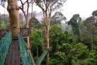 Канатная дорога в джунглях долины Данум