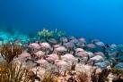 Подводный мир Карибского моря