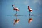 Фламинго на острове Кайо-Кайо