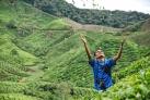 Чайные плантации в нагорье Камерон
