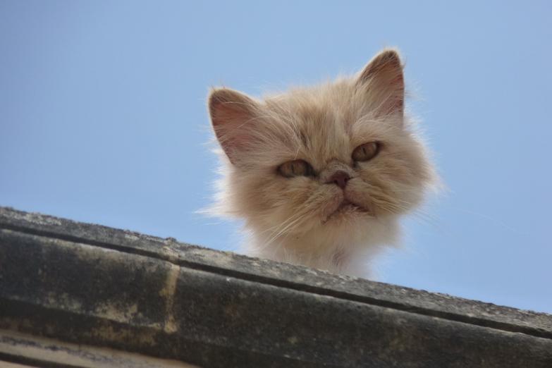 Любопытный кот на крыше в Шевкии