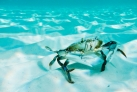 Морской обитатель острова Кайо-Гильермо
