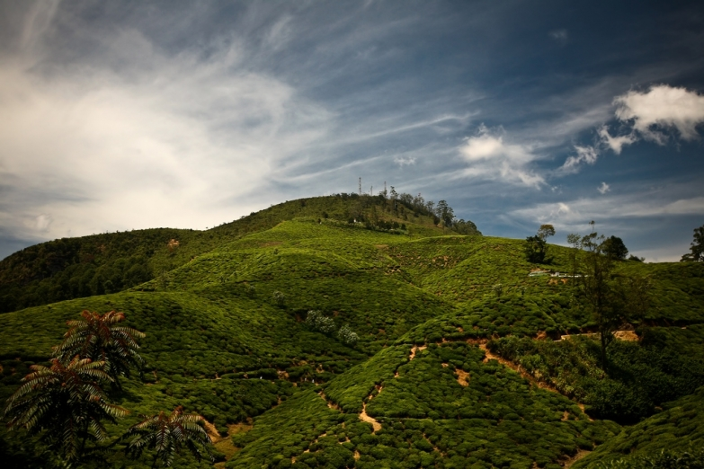 Гора Пидуруталагала