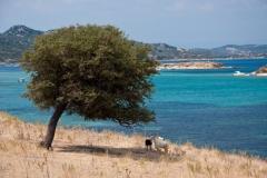 Остров Амульяни