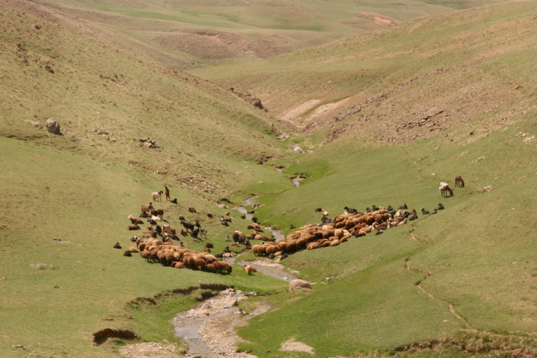 Стадо пасущееся на склоне горы