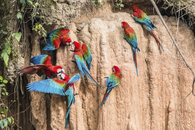 Разноцветные попугаи в заповеднике