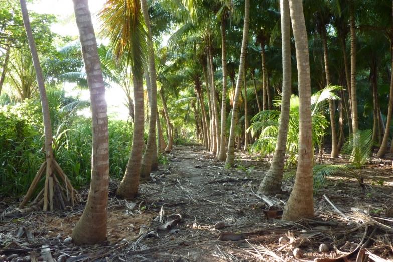 Остров Эйдафуши
