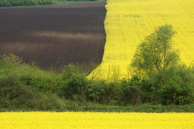 Румынские поля