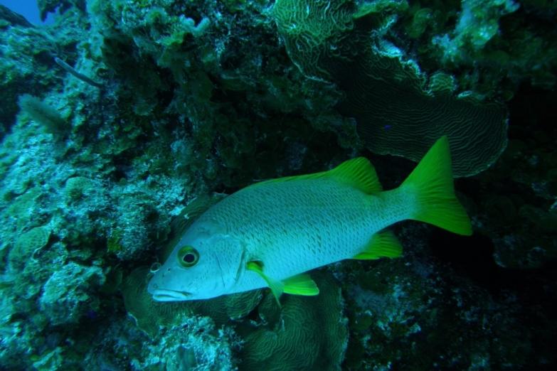 Подводный мир острова Хувентуд