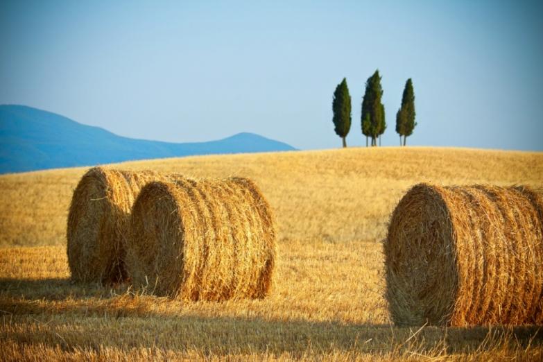 Летние поля Тосканы