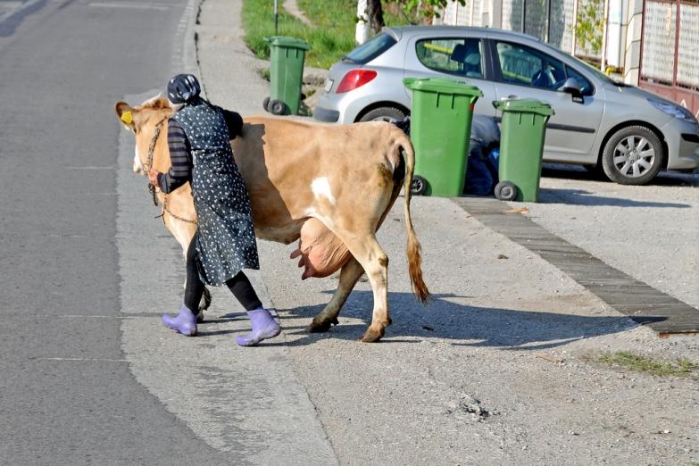 Город и село - женщина с коровой