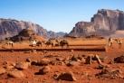 Верблюды в песках Вади Рум