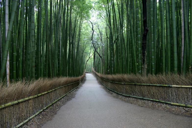 Аллея в бамбуковом лесу Сагано