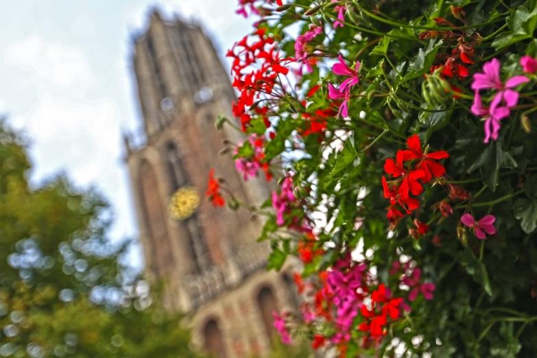 Цветы на фоне Домского собора