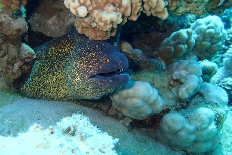 Подводные рифы