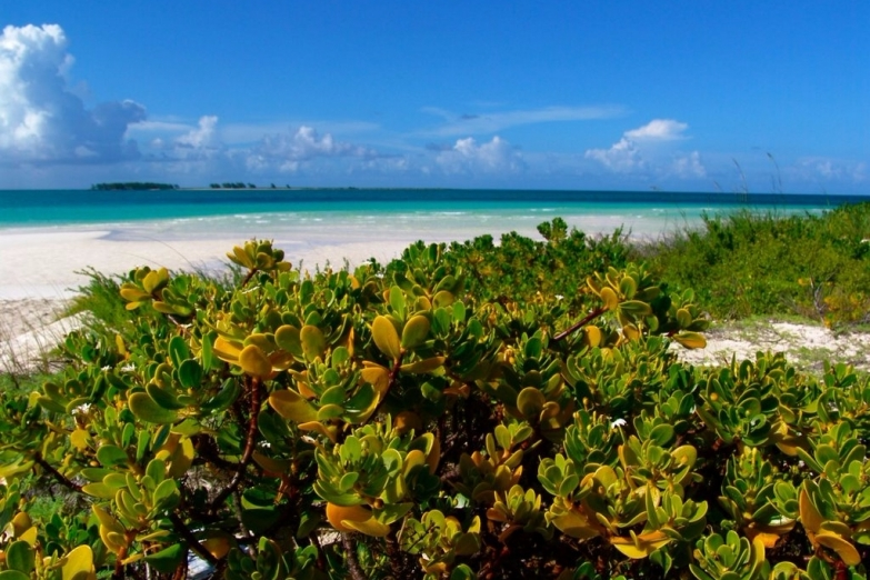 Вид на пляж и растения  Кайо-Гильермо