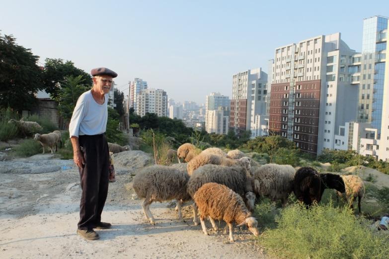 Пастух в пригороде Баку