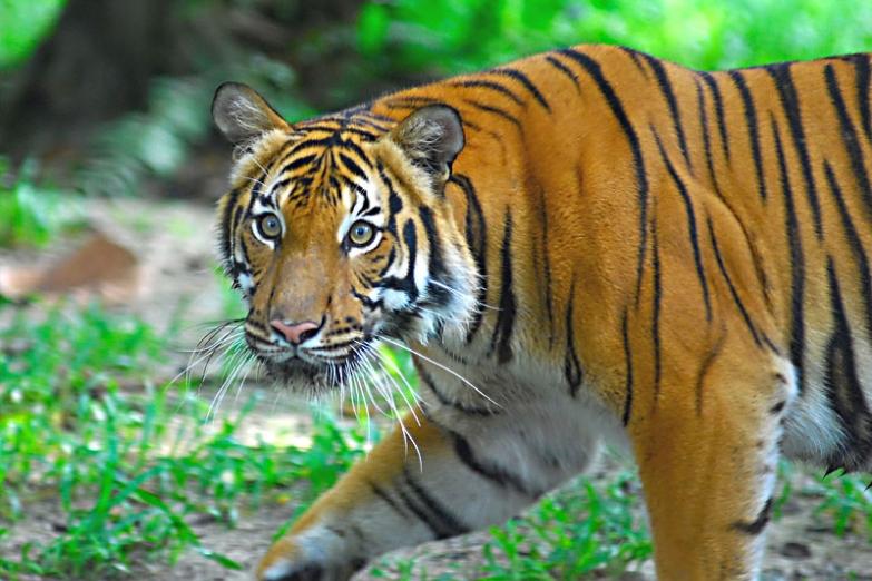 Национальный зоопарк или Zoo Negara