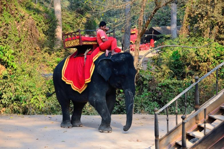 Слон и погонщик в ожидании клиентов