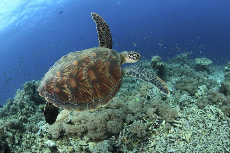Красоты подводного царства
