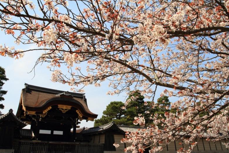 Весна в Киото