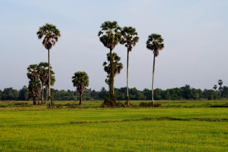 Пейзажи в окрестностях Баттамбанга