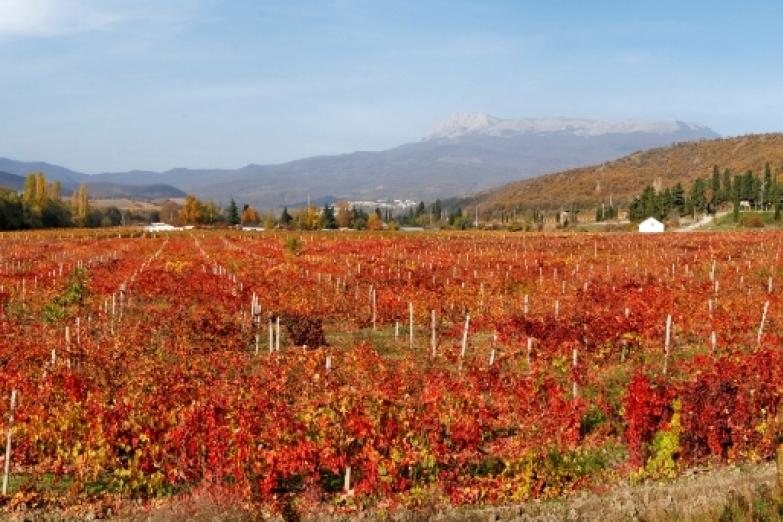 Виноградник Алушты