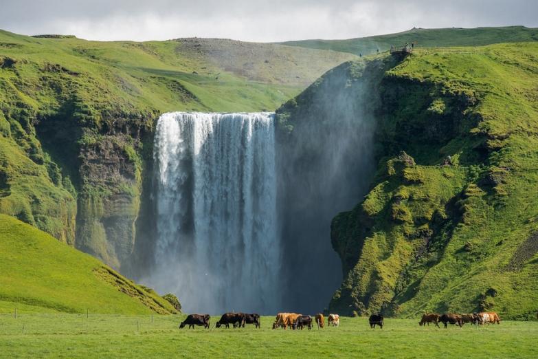 Лошади пасутся у подножья водопада