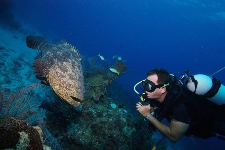 Подводный мир острова Кайо-Коко