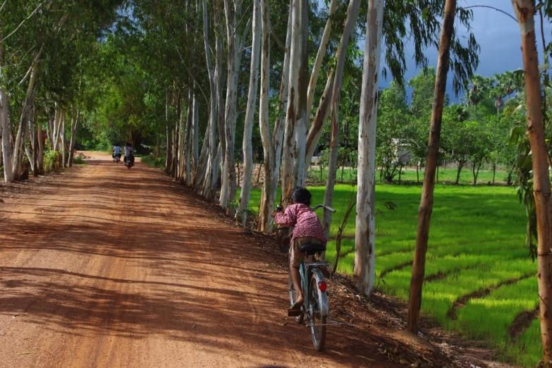 Природа вокруг Кампота