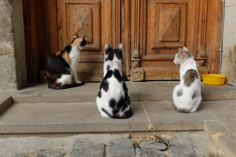 В ожидании обеда