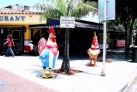 Петухи на улицах Маленькой Гаваны