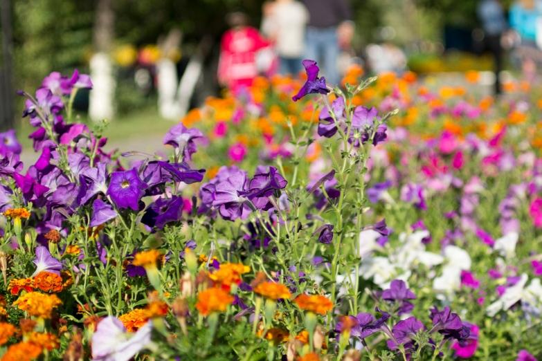 Цветы в городском парке