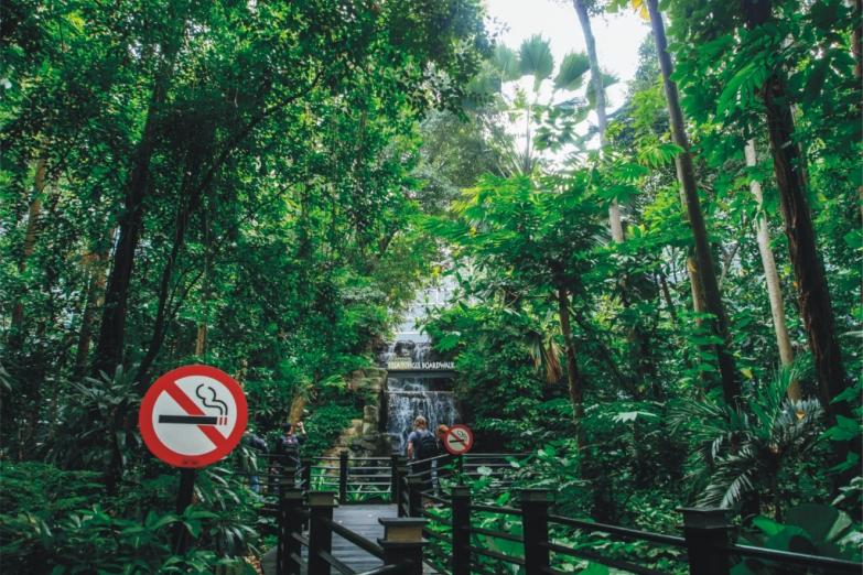 Кусочек настоящих джунглей в сердце аэропорта Куала-Лумпура