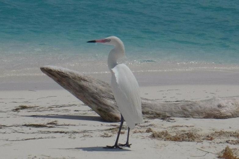 Представитель фауны на пляже Параисо