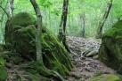Природа Адлера
