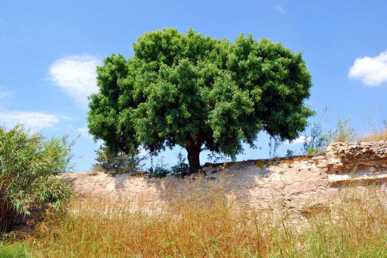 Живописное дерево и руины