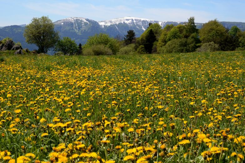 Цветущие луга Эльзаса