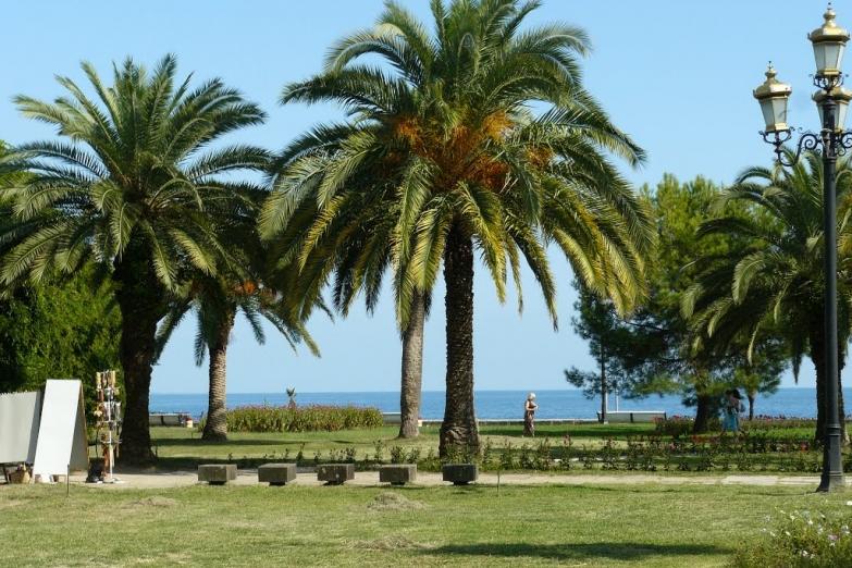 Набережная с пальмами