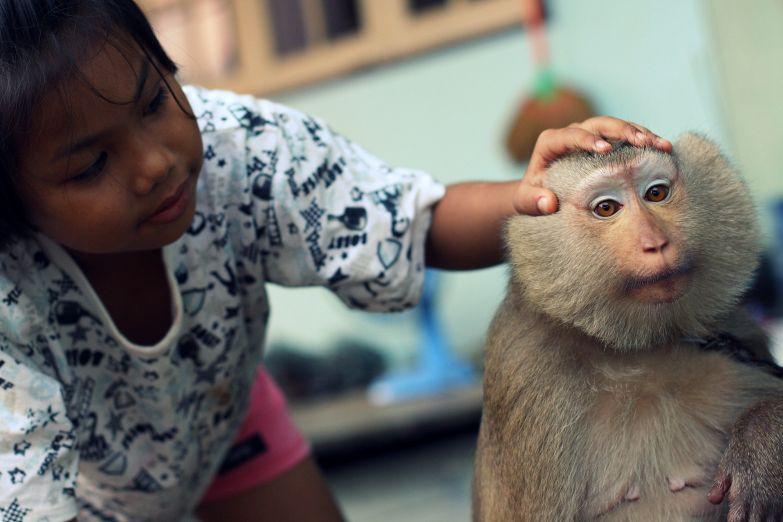 Школа обезьян