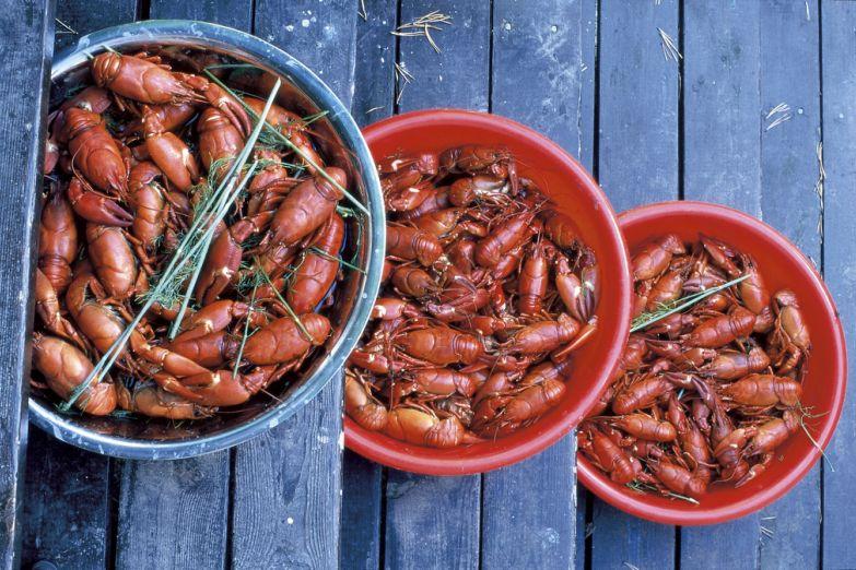 Вареные раки - популярное блюдо финской кухни