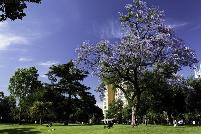 Городской сад Мельбурна