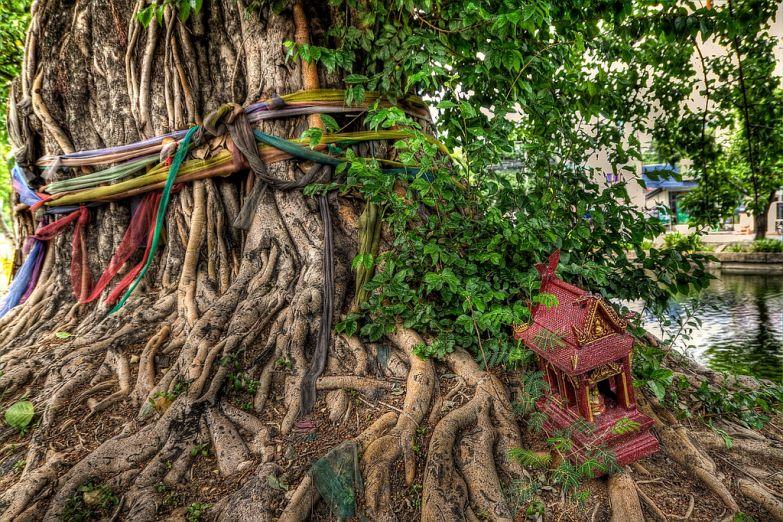 Дом духов в корнях баньяна