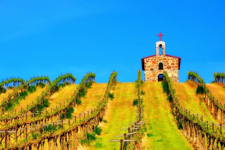 Виноградные рощи в Тоскане