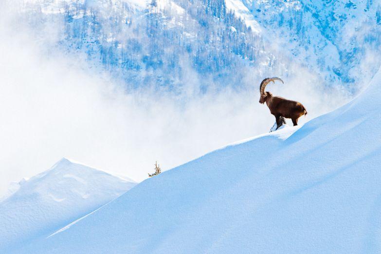 Альпийские снега