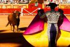Тореро сражается с быком