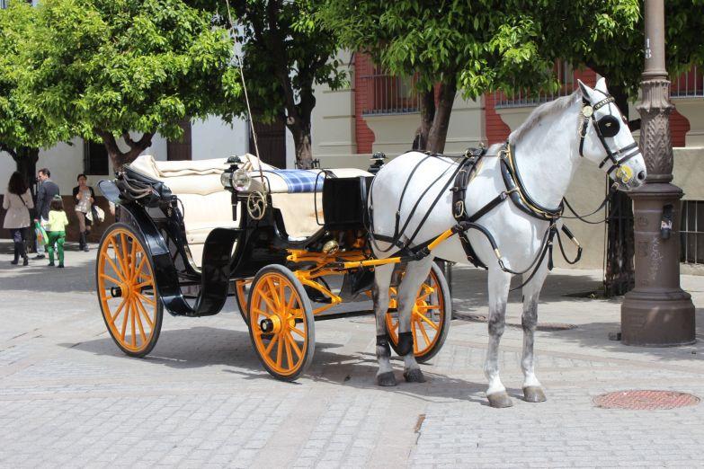 Повозка около Кафедрального собора