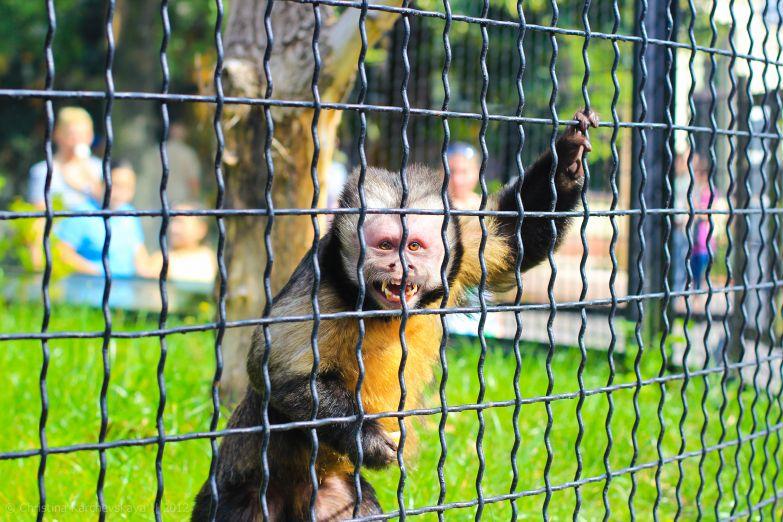 Варшавский зоопарк
