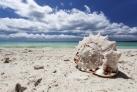 Раковина на тропическом пляже